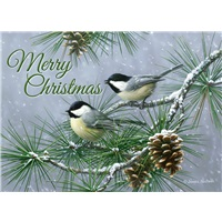 Pine Tree Chickadees