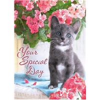 Gray Kitten and Flowers