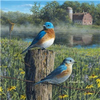 Morning Mist Bluebirds