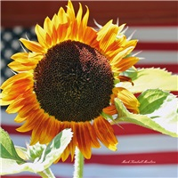 Sunflower & Flag