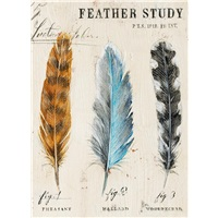 Trio of Feathers