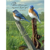 Prairie Bluebirds