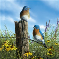 Twin Bluebirds
