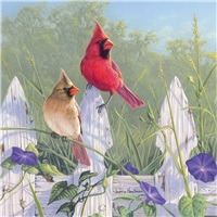 Morning Glories with Cardinals