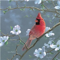 Cardinal & Flowering Dogwood