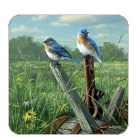 Prairie Meadow Bluebirds