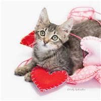 Be My Valentine Kitty
