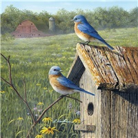 Barn and Bluebirds