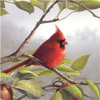 Cardinals and Apples