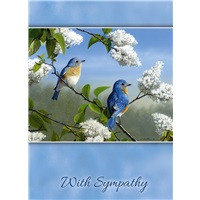 Blue Bird Couple