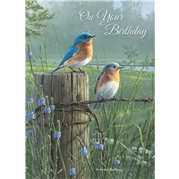 Bluebirds in the Meadow